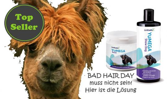 Lintbells Bad Hair Kombi Sparpaket Angebot
